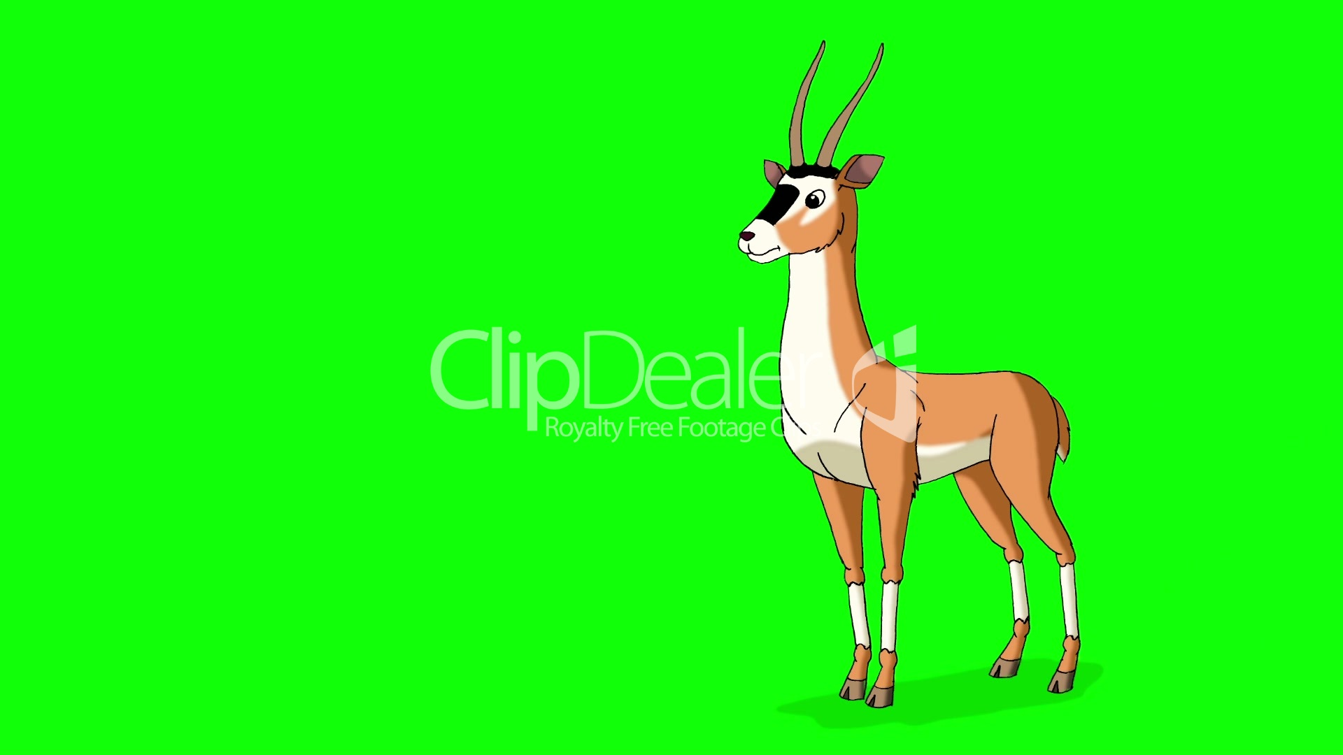 Gazelle Antelope Walks  Animated Motion Graphic Isolated on