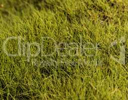Textured bright green moss background