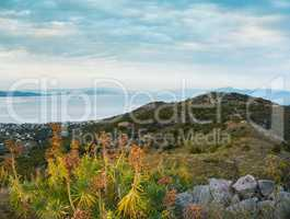 Mountain and sea landscape with mountain plants euphorbia in clo