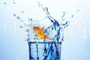 3D Composite image of goldfish against white background