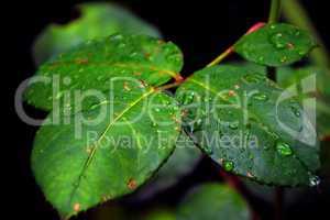 feuilles verte
