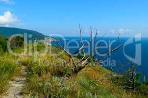 Dry tree on a background of forested mountains and the sea