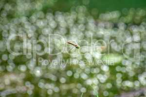 Macro picture of dragonfly flying on the water