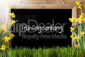 Sunny Narcissus, Chalkboard, Fruehlingsanfang Means Beginning Of Spring