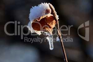 Dürres Blatt, Schnee und Eiszapfen
