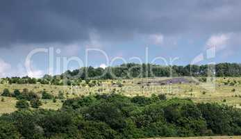 pasture on a mountain plateau