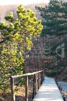 forest, wood trail, pine forest, journey, walk