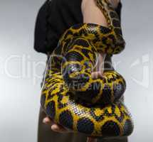 Snake on woman's hand