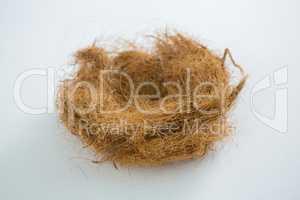 Close-up of nest