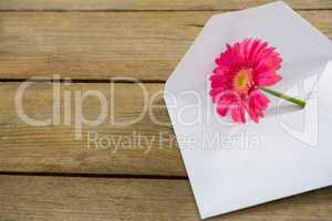 Pink flower in envelope on wooden plank