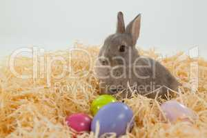 Easter eggs and Easter bunny in the nest