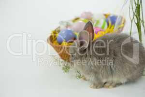 Basket with Easter eggs and Easter bunny