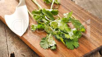 Leaves of coriander