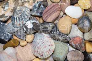 Muscheln und verschiedene Steine vom Strand