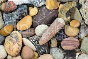 Donnerkeil und verschiedene Steine vom Strand