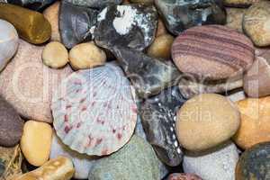 Muschel und verschiedene Steine vom Strand