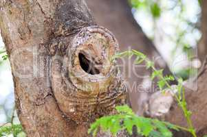 Hollow of a tree trunk at the site