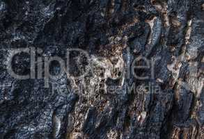 Texture of burnt wood