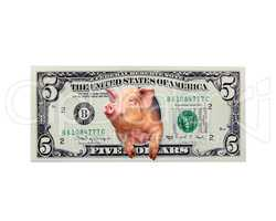 pig looks out of five dollars instead the American president isolated
