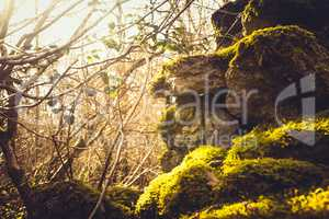 ivy and moss covering dry stone wall