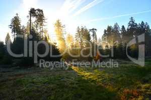 Sonnenstrahlen im Wald mit Bäumen