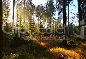 Sonnenstrahlen im Wald mit Bäumen im Herbst