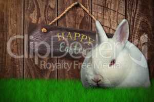Composite image of rabbit on white background