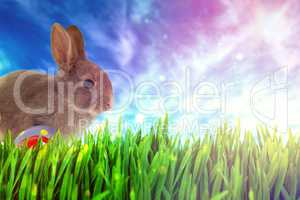 Composite image of bunny with polka dot easter eggs