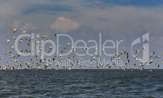 Flock of migratory birds