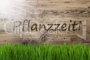 Sunny Wooden Background, Gras, Pflanzzeit Means Planting Season
