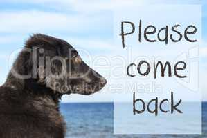 Dog At Ocean, Text Please Come Back