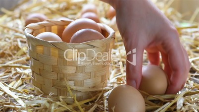 Local farmer collects eggs from chicken coop
