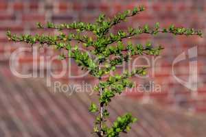 grüner Zweig