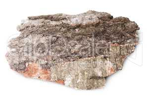 Piece Of Dried Bark Of Old Birch Tree