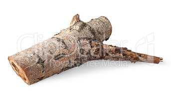 Single poplar log horizontally flipped