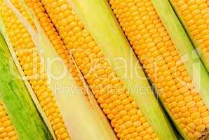 Stacked near peeled corn cobs diagonally