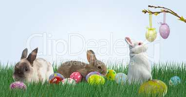 Rabbits and Easter eggs in the mountain