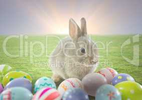 Rabbit with Easter eggs with sunset background.