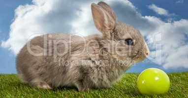 Rabbit with ball in front of blue sky
