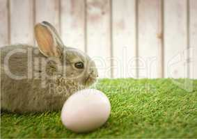 Brown rabbit with egg in the garden