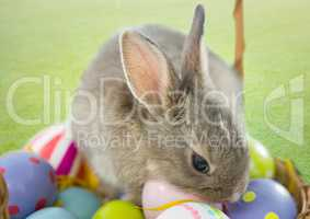 Rabbit with eggs on the basket.