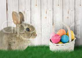 Rabbit with basket with color Easter eggs in the garden.