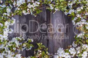 Flowering cherry branches with white flowers on a gray wooden su