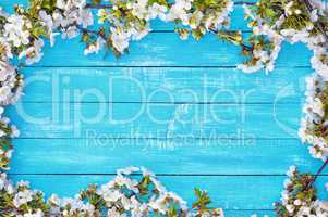Abstract wooden blue background with blooming cherry blossoms