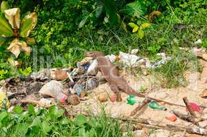 giant lizard on a garbage dump