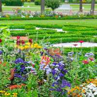 summer flower bed and green lawn