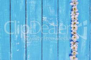 Blue wooden background with white cherry blossoms