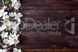 Flowering almond branch with white flowers