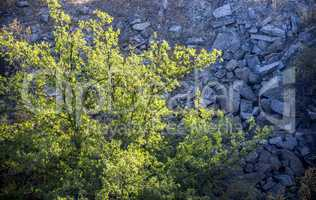 tree in unused stone quarry