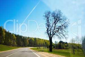 Dry tree near the road